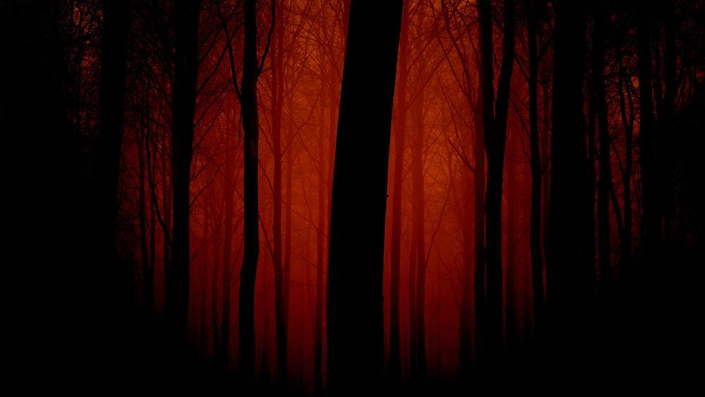 Темный лес фон