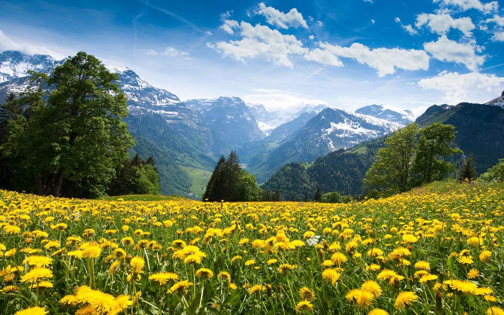 Oboi Vesna V Alpah Na Rabochij Stol