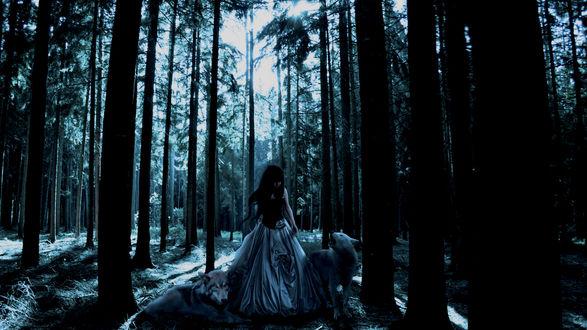 Обои Девушка с волками в тёмном лесу
