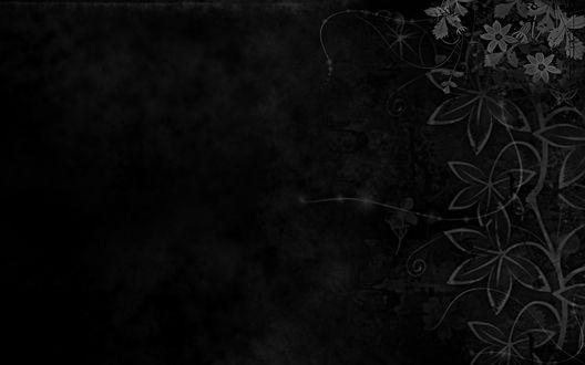 Обои Цветы на черном фоне