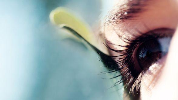 Обои Длинные ресницы и карие глаза