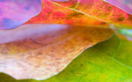 Обои Зеленые, желтые и красные осенние листья
