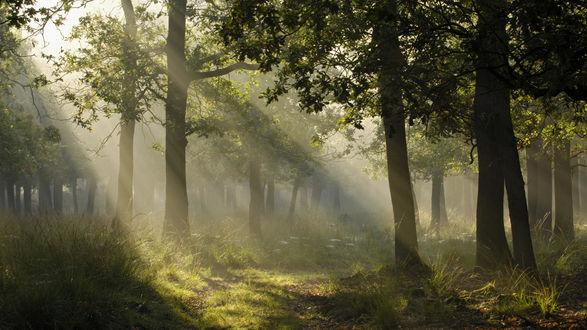 Обои Лучи солнца пробиваются сквозь густую листву