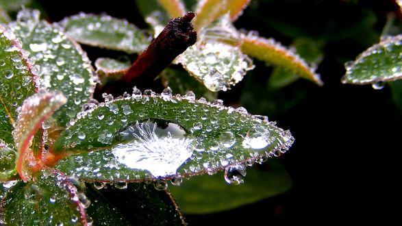 Обои Зеленые листья растения в каплях воды