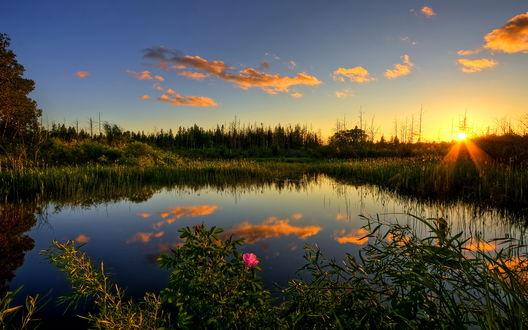 Обои Рассвет над маленьким прудом