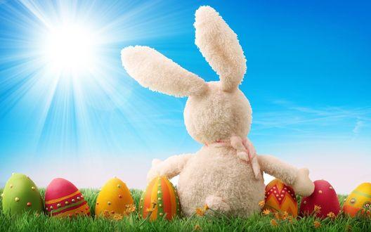Обои Игрушечный зайчик среди пасхальных яиц сидит на лугу и смотрит на солнце