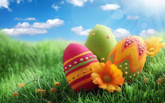 Обои Три пасхальных яйца на траве