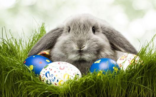 Обои Кролик сидит вместе с крашеными яйцами (Пасха)