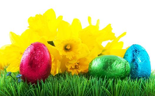 Обои Нарциссы и крашенные яйца лежат на травке