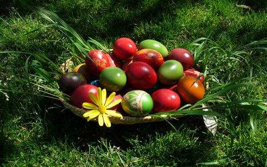 Обои Красивые, разноцветные яйца лежат в тарелке на траве