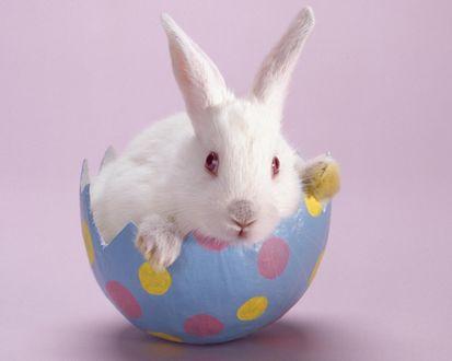Обои Пасхальный кролик вылупился из пасхального яйца