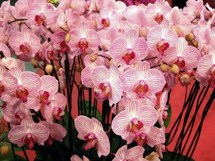 Орхидея цветок сканворд