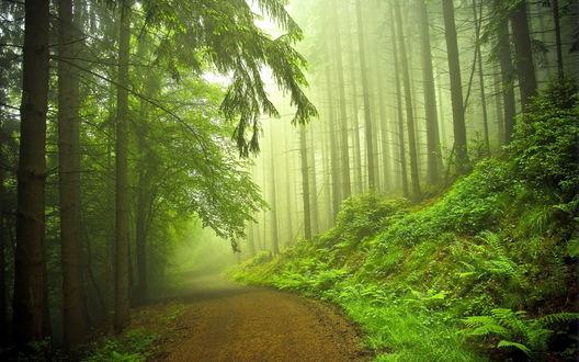 Обои Дорога сквозь дремучий лес