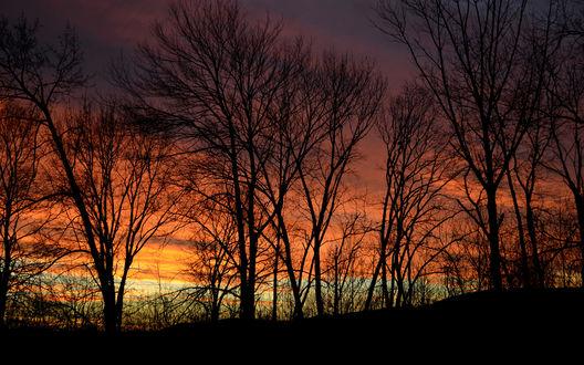 Обои Деревья на фоне заката