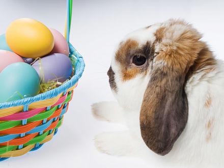 Обои Длинноухий кролик рядом с корзинкой с цветными пасхальными яйцами