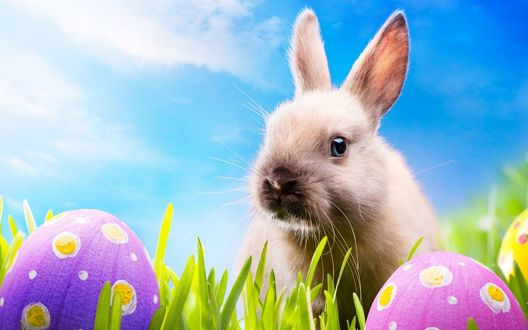 Обои Кролик и пасхальные яйца на траве