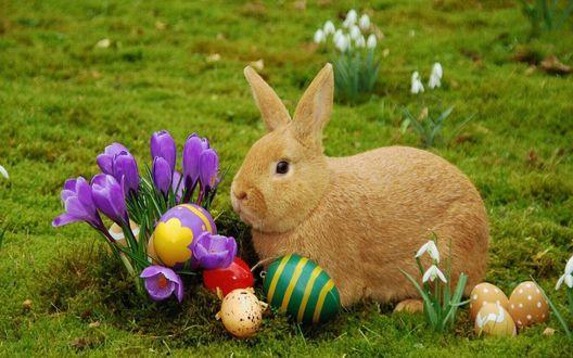 Обои Кролик и пасхальные яйца у крокусов и подснежников
