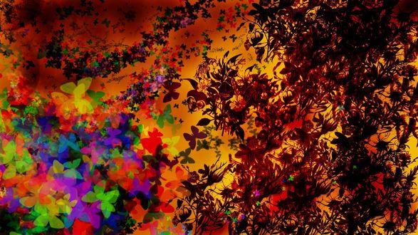Обои Множество разноцветных бабочек