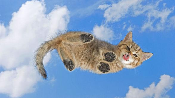 Обои Кот в полёте