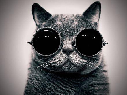Обои Кот в больших круглых очках