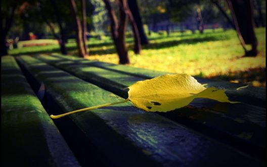 Обои Скамейка стоящая посреди аллеи, на скамейке лежит желтый осенний лист