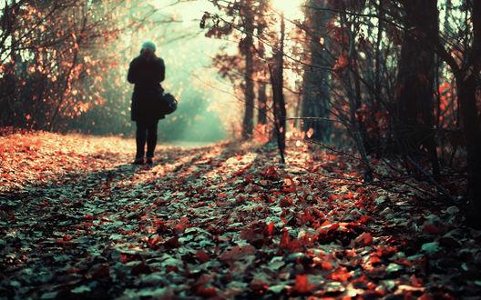 Обои Девушка в осеннем лесу