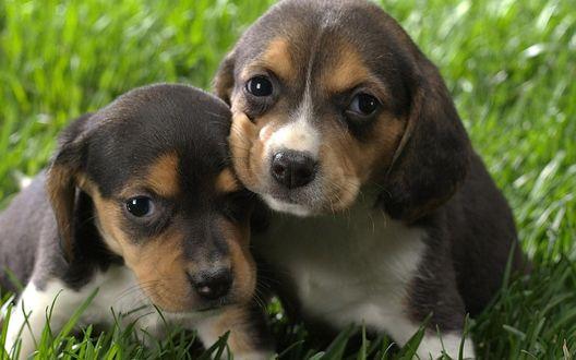 Обои Два маленьких милых щенка сидят на тарве