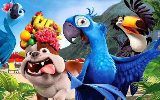 Обои Персонажи мультфильма Рио / Rio - Голубчик / Blu, Жемчужинка / Jewel, тукан Рафаэль / Rafael и бульдог Луис / Luiz  с фруктами на голове