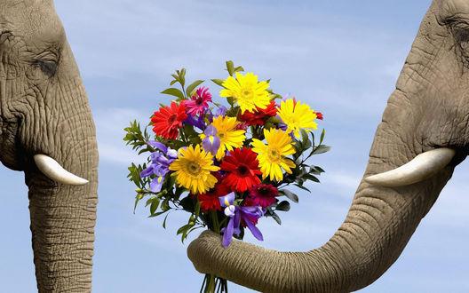 Обои Слон дарит букет цветов слонихе