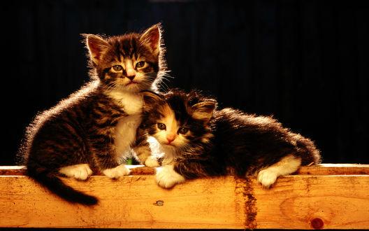 Обои Парочка симпатичных котят на доске, один из которых сидит на ней, а другой лежит на животе