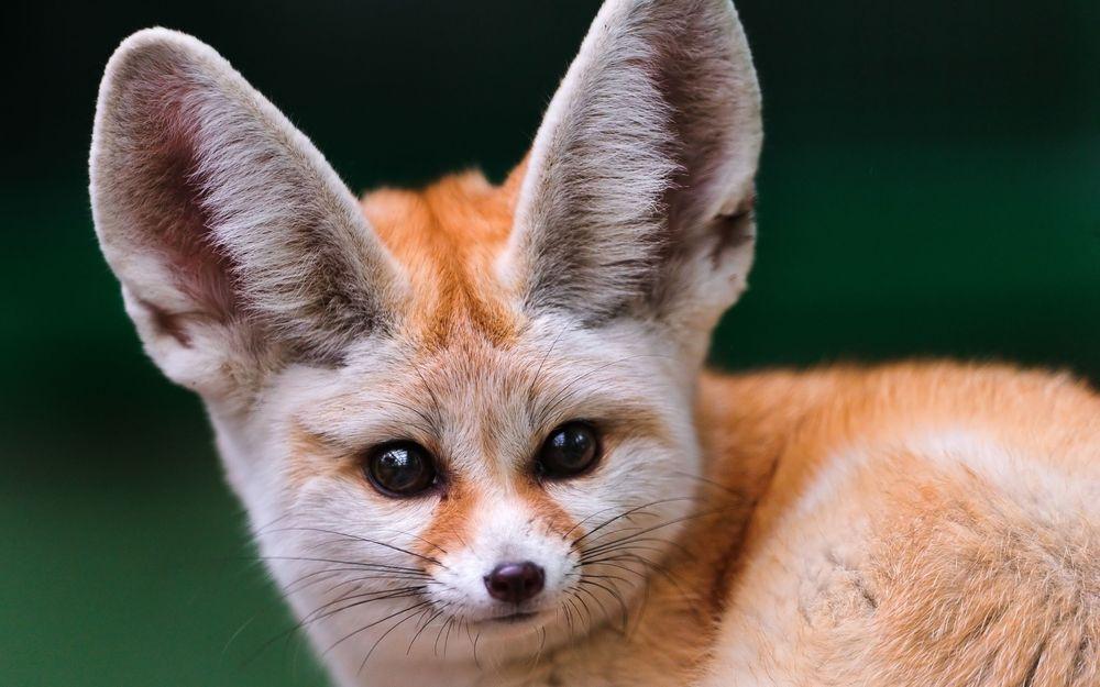 девушки с большими ушами