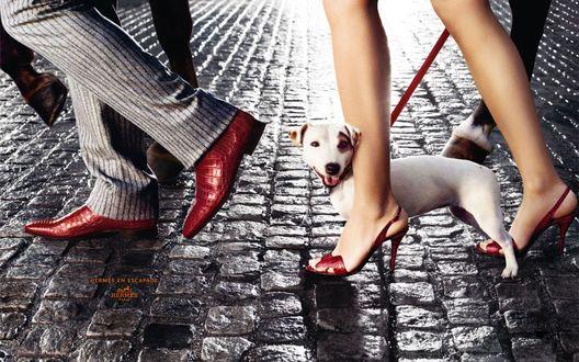 Обои Мужчина и женщина с собакой на поводке,идут по мощеной улице в обуви Hermes