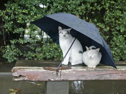 Обои Кошки под зонтиком сидят на лавочке
