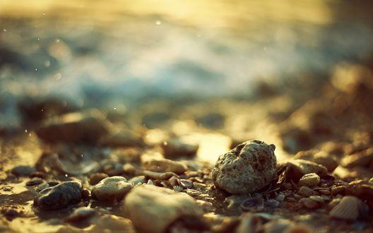 Обои Морские камни, ракушки на побережье