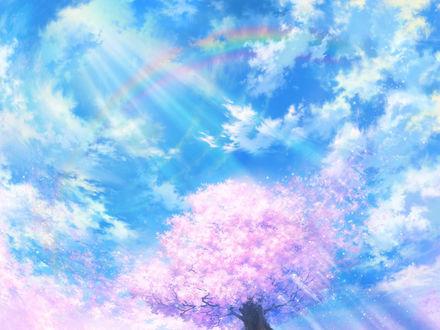 Обои Цветущее дерево сакуры на фоне неба, освещённое солнцем и радуга