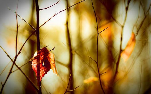 Обои Осенний лист висит на ветках