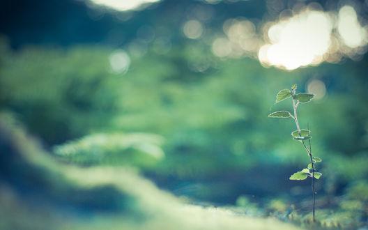 Обои Нежная природа, стебелек с маленькими листьями