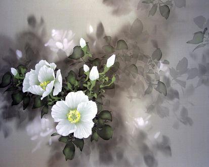 Обои Художник David Lee / Белые цветы