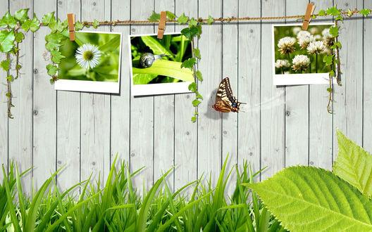 Обои Летние фотографии на заборе