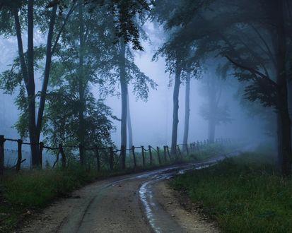 Обои Дорога меж деревьев, уходящая в туман
