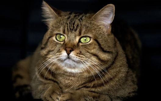 Фото кот с зелёными глазами