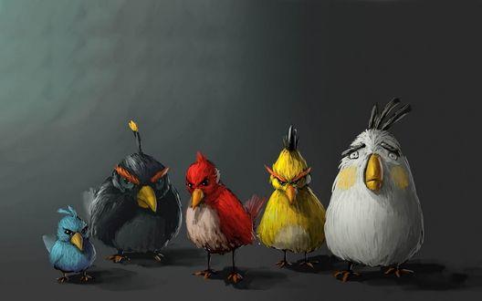 Обои Птицы из игры Angry Birds