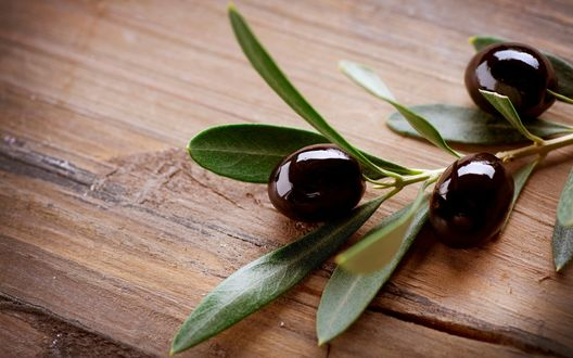 Обои Веточка маслин