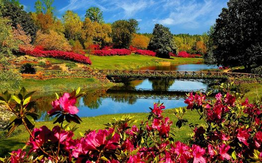 Обои Мост через речку в саду, по берегам растут цветущие рододендроны