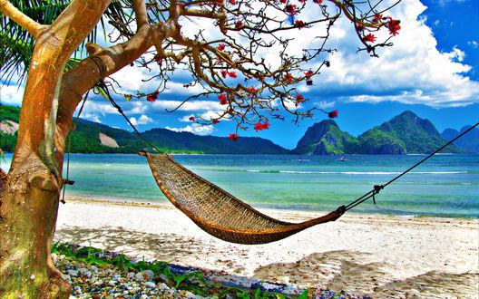 Обои Гамак на берегу моря ждет своего отдыхающего