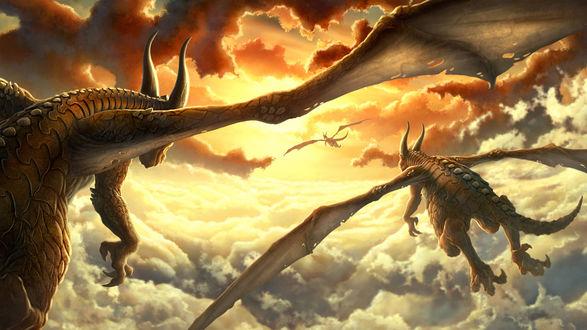 Обои Драконы летят над облаками навстречу солнцу