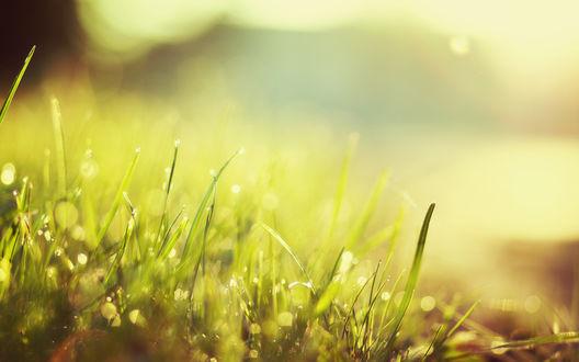 Обои Блики на зеленой траве