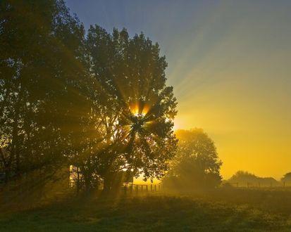 Обои Солнечные лучи красиво обрисовывают крону дерева, за которым виден дом и изгородь вокруг него
