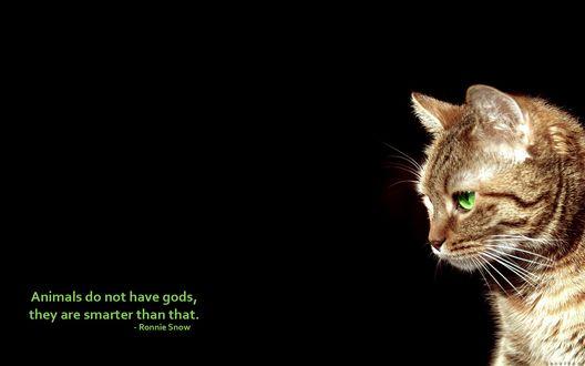 Обои Зеленоглазый кот, рядом надпись (Animals do not have gods they are smarter than that. Ronnie Snow  / Животные не боги, они умнее. Ронни Сноу)