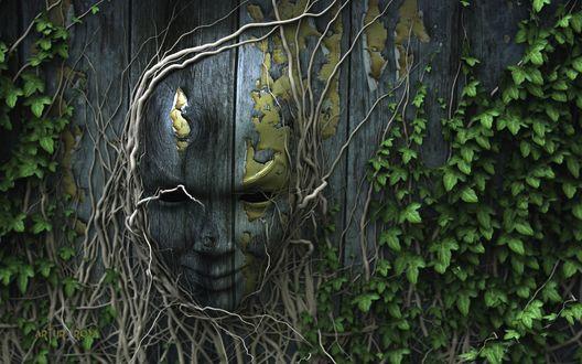 Обои Обычный деревянный забор превратился в пластичную массу, из которой и получилась эта маска. Окутанная витиеватыми побегами плюща деревянная маска пустыми глазницами смотрит вдаль - Artur Rosa